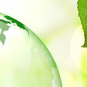 Ökologische Spülmittel